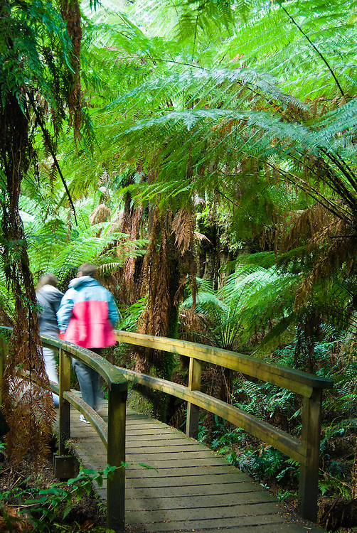 Hikers crossing a bridge on rainforest walking track in Otways Forest, near the Great Ocean Road, Australia.