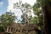 A tree grows from the room of Ta Prohm temple.