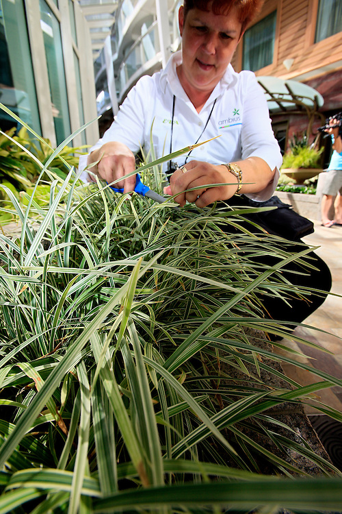 A gardener tending the plants in the Central Park onboard the cruise ship Oasis of the Seas. The ship, currently the largest in the world, is owned by Royal Carribean Cruise Line.
