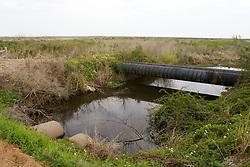 Freshwater Marsh Environment
