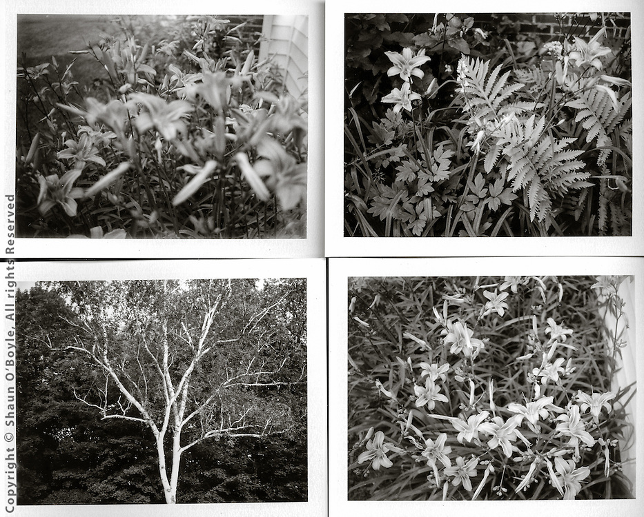 Polaroid camera snap shots from my dwindling supply of Fuji FP3000 B&W instant film stock.