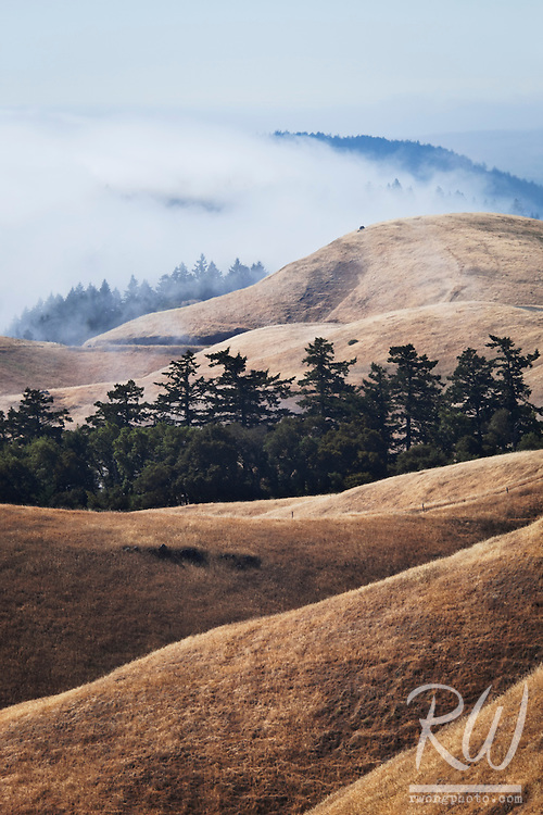 Summer Fog Rolling in Bolinas Ridge, Mount Tamalpais State Park, California