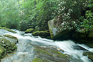 Eastatoe Creek lies in the heart of South Carolina's temperate Rain Forest. The Southern Blue Ridge Escarpment of South and North Carolina is second only the Pacific-Northwest in the amount of rainfall that it receives and has been reported to harbor the only U.S. location of the tunbridge fern and filmy ferns from South America. This pristine creek, which harbors native brook trout, eventually becomes compressed into a small, but deep crack in the creek bed, known as The Narrows, creating huge plumes of mist that fill Eastatoe Gorge, in-turn allowing this incredible array of ferns and other plant and animal life to exist. ..Eastatoe was the Cherokee word for the extinct Carolina Parakeet.