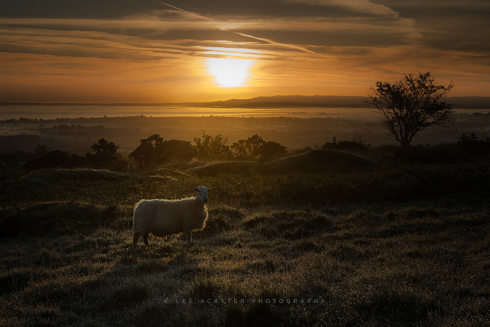 Processing a few more from Cornwall recently. Some lovely low lying mist on this morning but the sky wasn't great with very strong sun and my highlights are so blown I didnt bother doing anything with the shots, though this one is almost salvageable. Spent a long, long time running around trying to get a sheep nicely backlit. Faster than you think are sheep. I should have spend more time worrying about the sun instead!