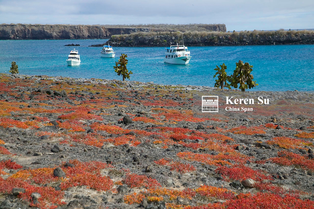 Landscape of Galapagos Island abundant in wild life, tourists and yachts on the beach, Ecuador