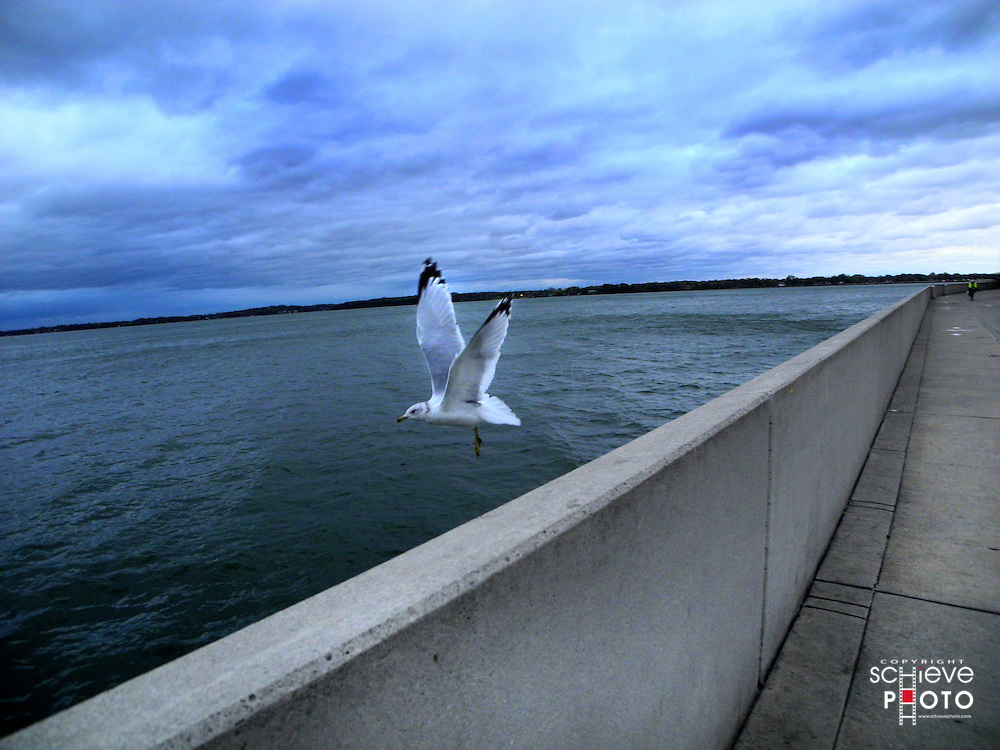 A single seagull takes flight over Lake Monona in Madison, Wisconsin.