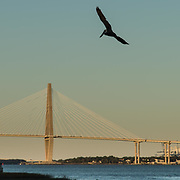 Bridge with Pelican 2016<br />