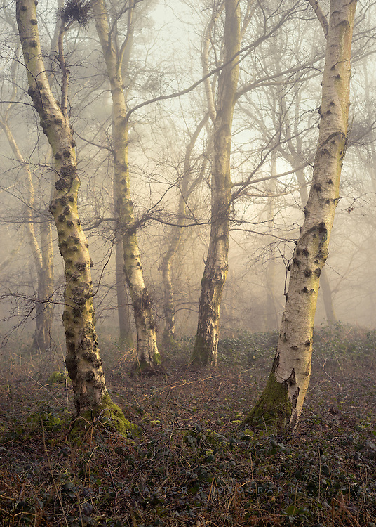 Its been an age since we got really good conditions in the woods, but yesterday morning started with thick fog, and then to top it off the sun broke through.