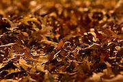 rich golden texture of fallen autumn leaves