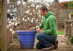 Feeding a container grown magnolia with slow release fertiliser