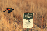 Red-winged Blackbird and Waterfowl Production Area Sign