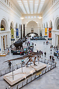 Field Museum of Natural History main hall in Chicago USA