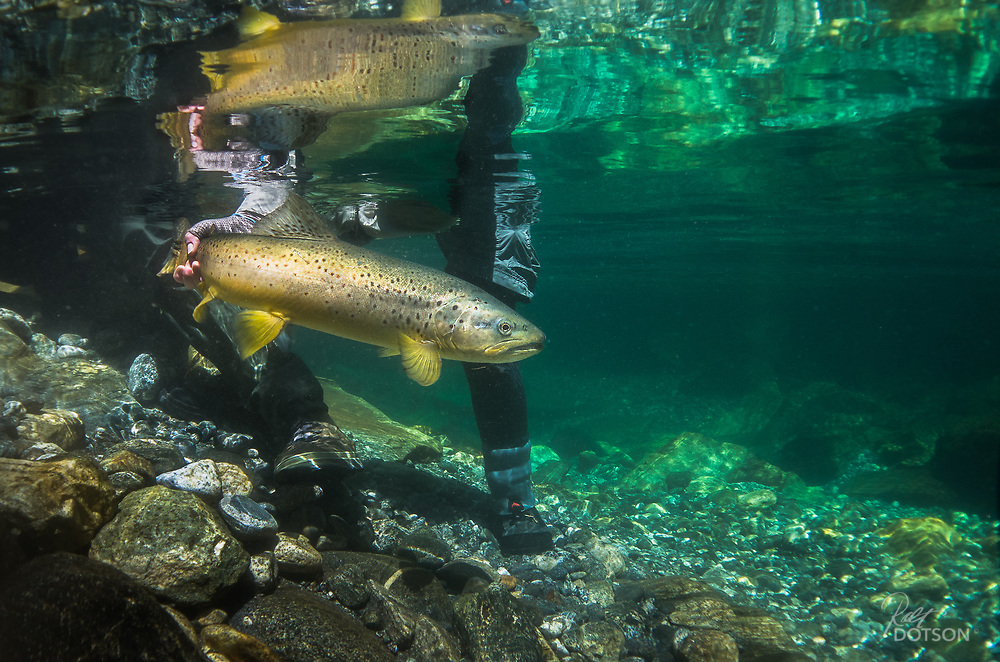 Ron and Kelli return a brown into the Joe's in the remote Milford Sound region.