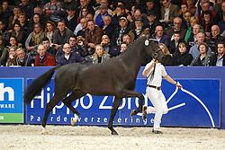 529 - Galaxie Terra<br /> KWPN Stallion Selection - 's Hertogenbosch 2014<br /> © Dirk Caremans