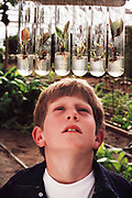 USA_SCI_BIOSPH_66_xs <br /> Biosphere 2 Project undertaken by Space Biosphere Ventures, a private ecological research firm funded by Edward P. Bass of Texas.  Young visitor looks at tissue culture test tubes inside the Biosphere test greenhouses.  Biosphere 2 was a privately funded experiment, designed to investigate the way in which humans interact with a small self-sufficient ecological environment, and to look at possibilities for future planetary colonization. The $30 million Biosphere covers 2.5 acres near Tucson, Arizona, and was entirely self- contained. The eight 'Biospherian's' shared their air- and water-tight world with 3,800 species of plant and animal life. The project had problems with oxygen levels and food supply, and has been criticized over its scientific validity. 1988