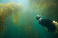 Russell Laman (age 13) snorkeling in the Giant Kelp (Macrocsytis pyrifera) forest off La Jolla, CA