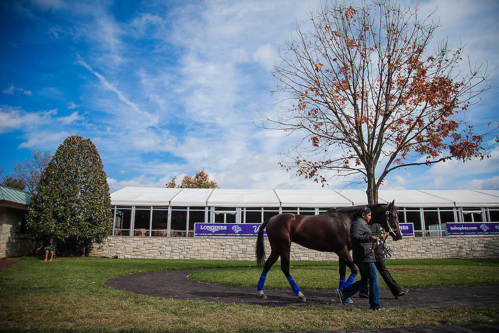 October 29, 2015:  Songbird, trained by Jerry Hollendorfer and owned by Fox Hill Farms Inc., exercises in preparation for the The 14 Hands Winery Breeders' Cup Juvenile Fillies at Keeneland Race Track in Lexington, Kentucky. Alex Evers/ESW/CSM