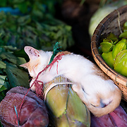 Kitten sleeping amongst vegetables for sale at market in Hue