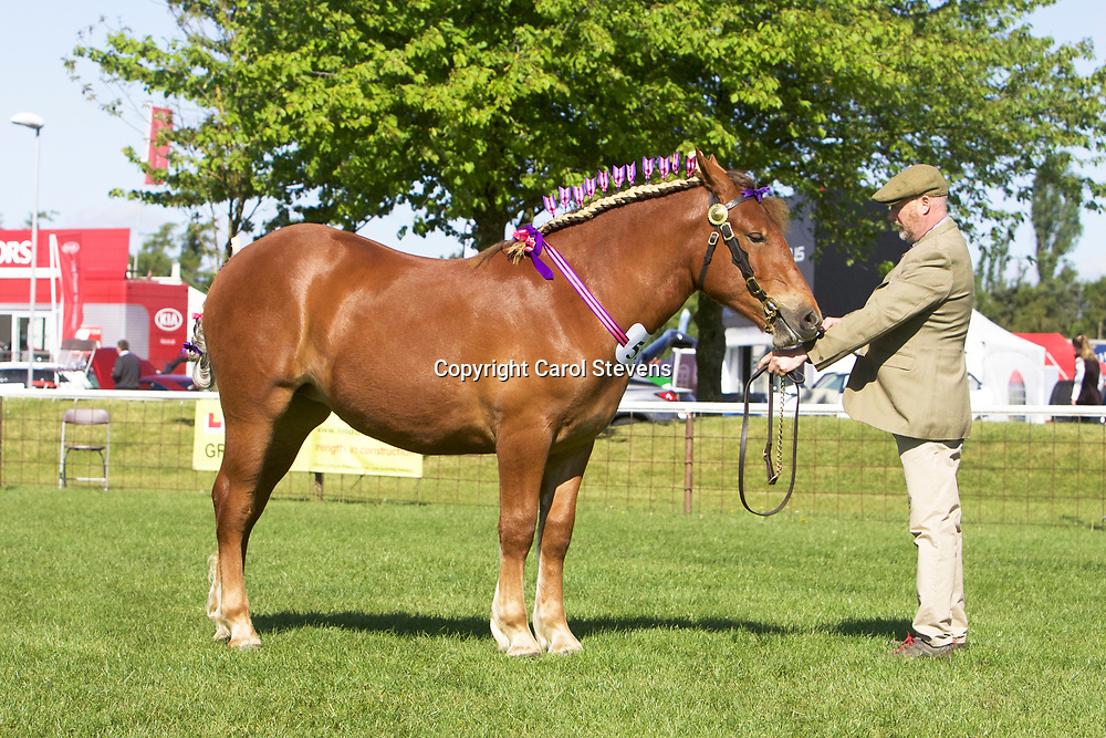 Notts County Show 2017<br /> Suffolk Punch and Percheron Classes