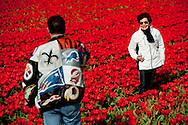 LISSE - Toeristen maken van elkaar foto's tijdens de eerste paasdag tussen de bollenvelden in Lisse. COPYRIGHT ROBIN UTRECHT FOTOGRAFIE