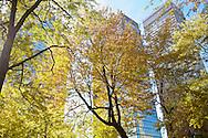 Autumn in Montreal, Quebec, Canada