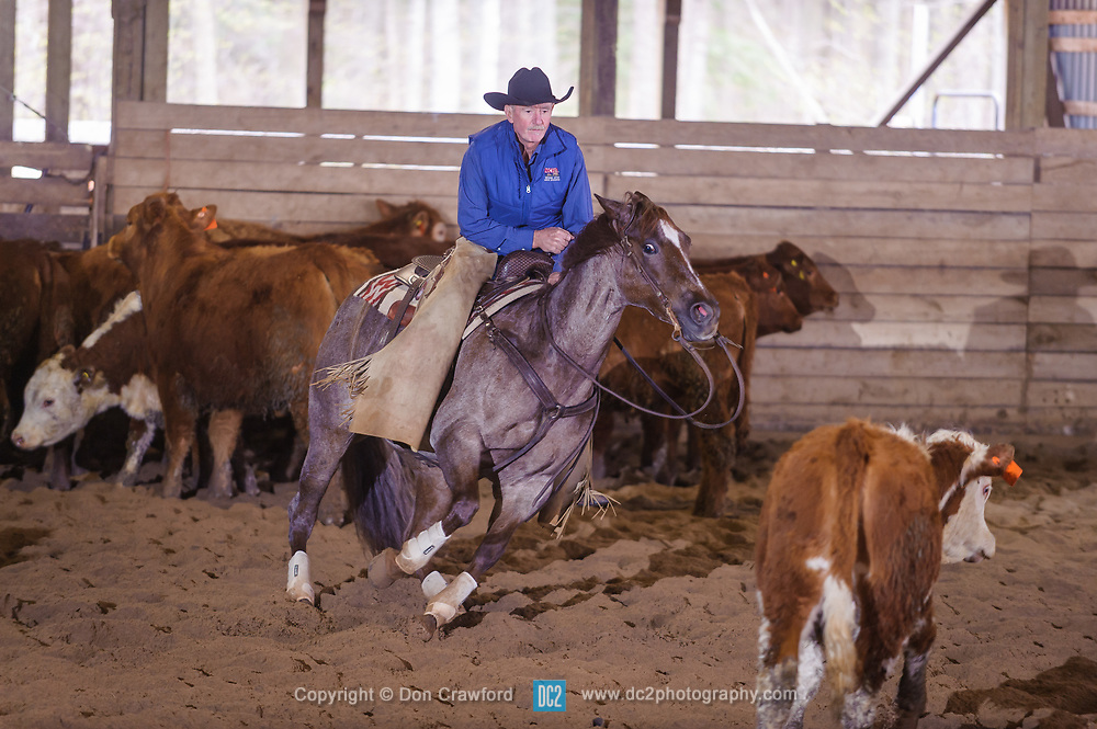 April 29 2017 - Minshall Farm Cutting 1, held at Minshall Farms, Hillsburgh Ontario. The event was put on by the Ontario Cutting Horse Association. Riding in the 25,000 Novice Horse Non-Pro Class is Greg Wilde on Bobby Cee Lena owned by the rider.