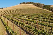 Evening Land Vineyards, Santa Barbara, California