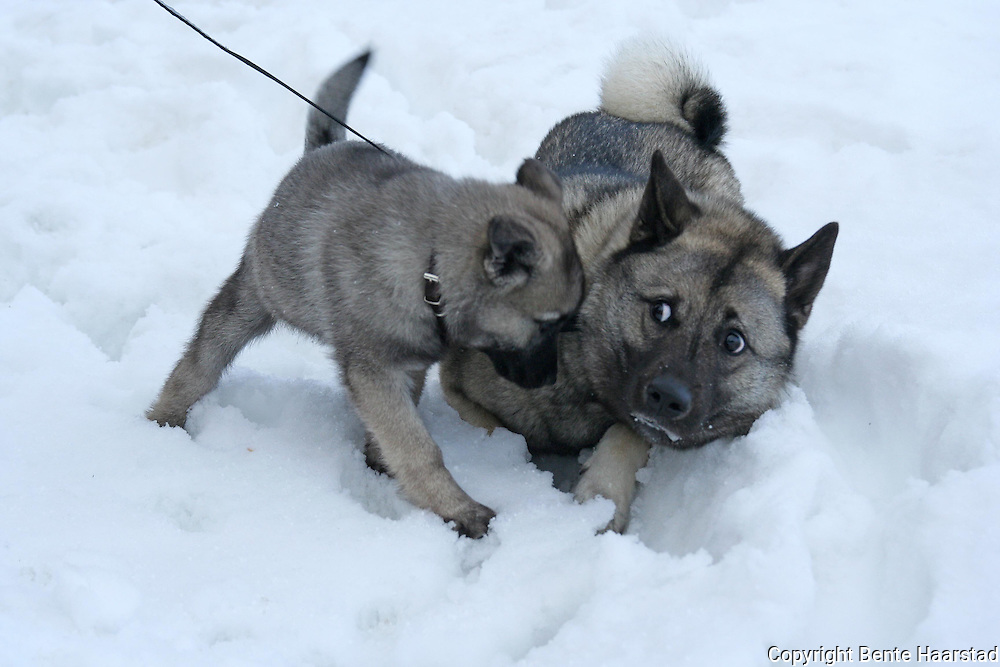 dogging norway møteplassen single