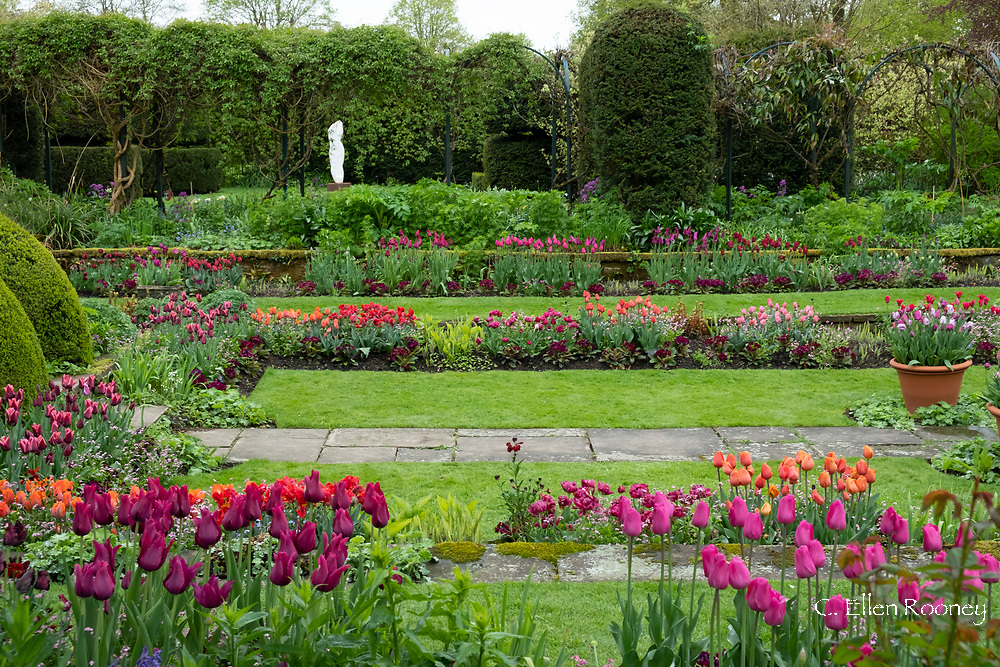 Rows of multi-coloured tulips in the Sunken Garden at Chenies Manor, Rickmansworth, Buckinghamshire, UK, April