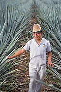 Manuel Jesus Chan, an employee of the artesenal tequila distillery Mayapan in Valladolid, Mexico, stands in the agave fields adjacent to the production facility.