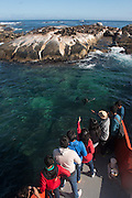 Tourism to see Cape fur seal colony (Arctocephalus pusillus)<br /> Duiker Island non breeding mostly young males<br /> Western Cape<br /> SOUTH AFRICA<br /> RANGE: Southern and southwestern coast of Africa from Cape Cross in Namibia to Cape of Good Hope to Black Rocks near Port Elizabeth.
