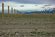 New planting, Huia