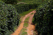 Conceicao do Castelo_ES, Brasil...Detalhe da rota Imperial em Conceicao do Castelo...Detail of Imperial route in Conceicao do Castelo...Foto: LEO DRUMOND / NITRO