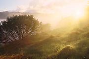 The sun blast through the misty fog of a grassy hillside.
