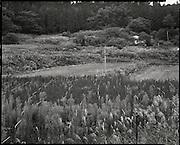 Abandoned farm Iitate Fukushima