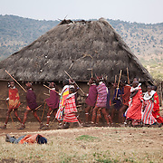 Groups of young girls and men dance around the boma showing off their moves and outfits. <br /> Maasai Maar in the Loita Hills near the Tanzanian border.A Maasai wedding party is underway. It is mainly Maasais who live in the Loita Hills up above the Serengeti plains. They live in small villages and communities called bomas and live mainly of raising and selling live stock such as cattle and goats. Its a very remote region in Kenya, hard to get to without a four wheel drive with very little infrastructure and up till 2010 no mobile phone network. The Maasais are well known though out Kenya and the world for their colorful clothing and their way of keeping their old traditions alive.