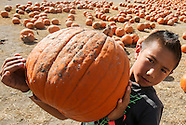 2015 Pumpkin Patch at Cal Poly Pomona