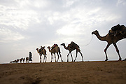 A camel train makes its way to Dallol for salt trade