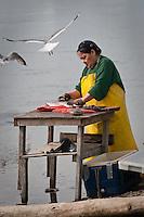 Subsistence salmon, Phillip Akelkok, Ekwok, Alaska, Subsistence salmon, Anna P. Akelkok
