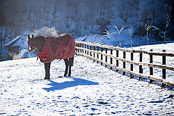 © Licensed to London News Pictures. 30/01/2019. Butlers Cross, UK.  A horse grazing in a snow covered field near Butlers Cross, Buckinghamshire, as snow hits the south east of England. Photo credit: Ben Cawthra/LNP
