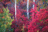 Fall's beautiful colors show brightly along Utah's Wasatch Front.