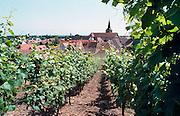 Frankrijk, Elzas, 7-7-2002..Het stadje Turckheim. wijnbouw, druiventeelt, wijnstok, economie, wijnproductie..Foto: Flip Franssen/Hollandse Hoogte