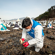 Volunteers clean oil off of rocks near the site of an oil spill in Yeosu, South Korea.