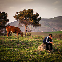 A boy cattle herder, sits calmly and confidently, as the herd grazes all over the hill top.