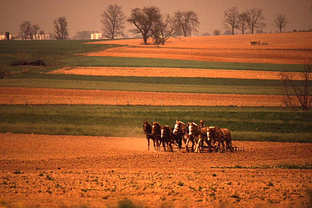 Amish mule team cultivates field, landscape, Lancaster County
