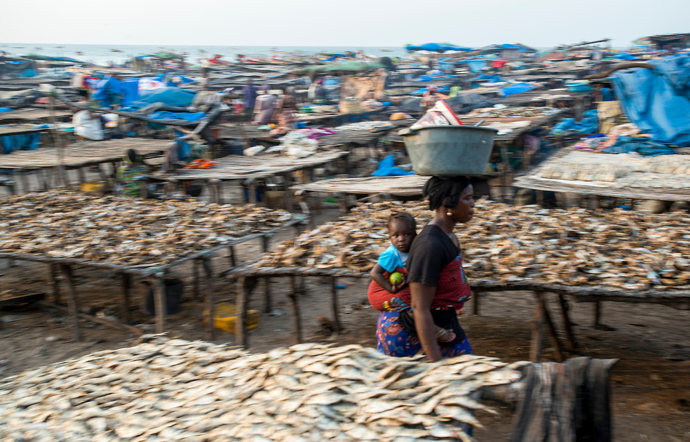 A woman passes through drying racks where fish dry in the open air on the beaches of Kafountine. Traditional maritime fishing in Casamance and the transformation of fish into smoked, salted and dried products has increased significantly in recent years and plays an important role in the economy of the region. However, the cutting of forests to feed the fish smoking ovens along with the consequences of climate change on the local ecosystem are threatening the traditional way of life and economic activities of the region. Kafountine, Senegal. 08/11/2014.