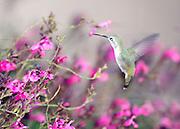 Local Arizona birds.