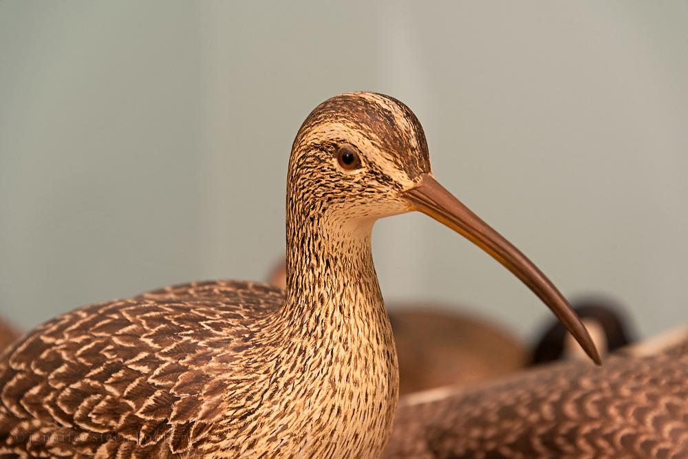 Bird carving by Harold Haertel
