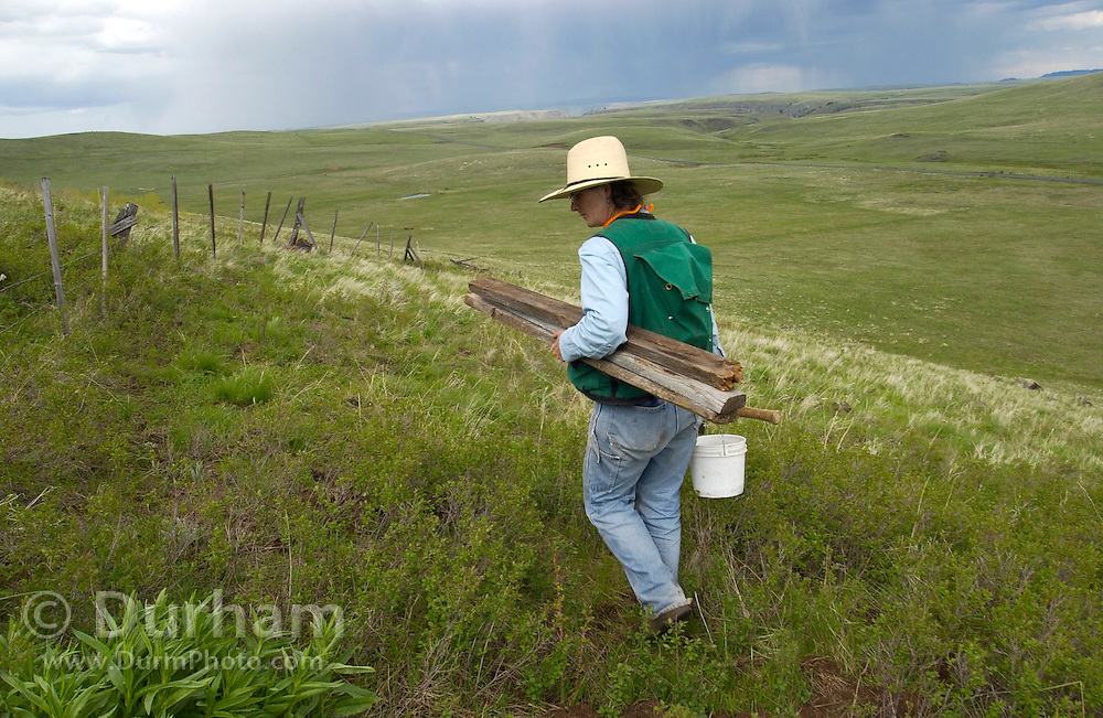 Andi Mitchell, Preserve Steward for The Nature Conservancy's Zumwalt Prairie Preserve, checks an antique range fence in preparation to open the grassland to cattle grazing. The old barbed wire fence is being maintained to contain cattle while allowing wildlife, such as elk and deer, to pass. (fully released)