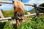 old farm, closeup of muzzle the horse